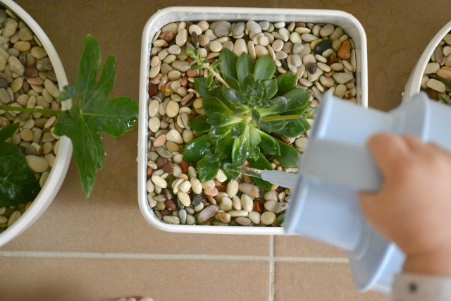 Montessori Practical Life - Care of the Environment - watering