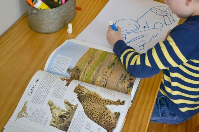 Caspar drawing cheetahs