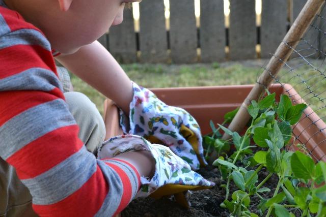Caspar planting