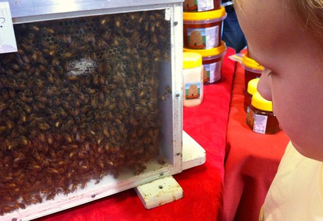 Watching bees at Win's Creek Honey stall at Capital Region Farmers Market