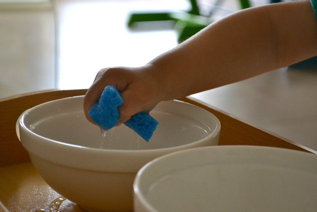 Montessori toddler water transfer with a sponge
