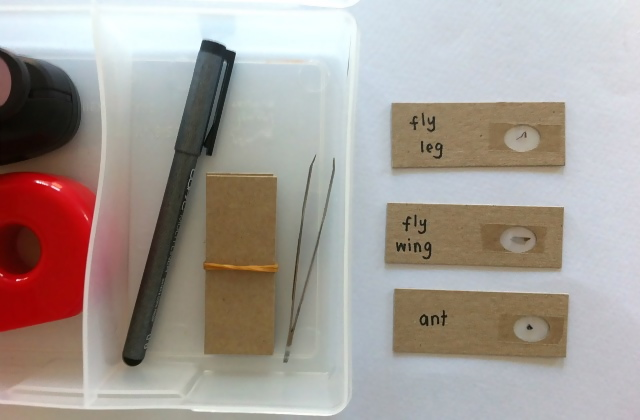 DIY Microscope Slide Kit - for a five year old