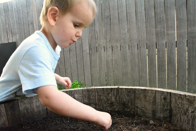 Otis planting seeds 28 months August 2013