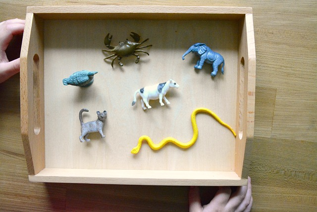 I Spy - Using Model Animals