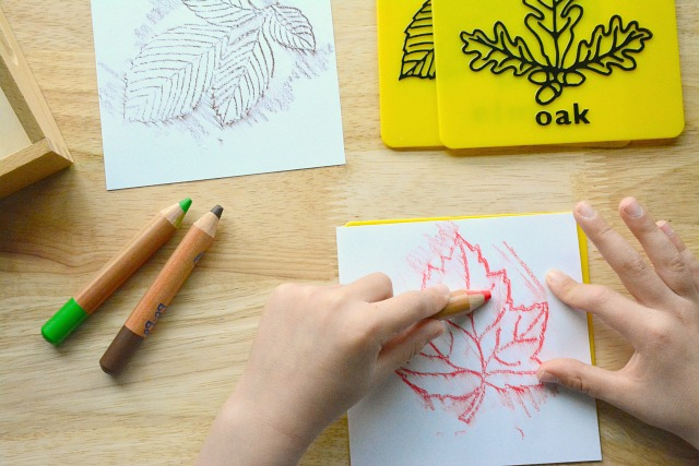 Montessori Leaf Rubbing Maple