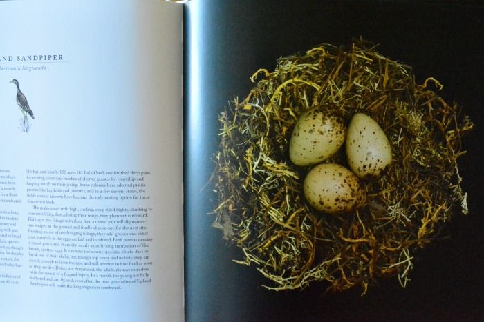 Nests, Fifty Nests and the Brids that Built Them by Sharon Beals