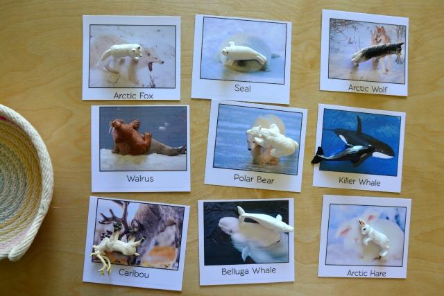 Brainy Box Matching Arctic Cards at How we Montessori