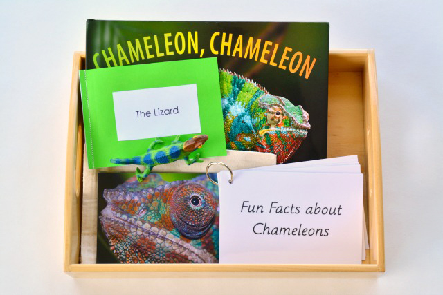 Chameleon interest tray at How we Montessori