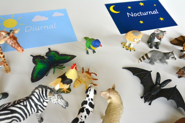 Nocturnal Animal Sorting Montessori Activity