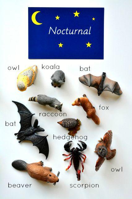 Primarily Nocturnal Animals at How we Montessori