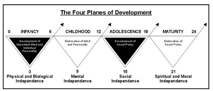 The Four Planes of Development Montessori
