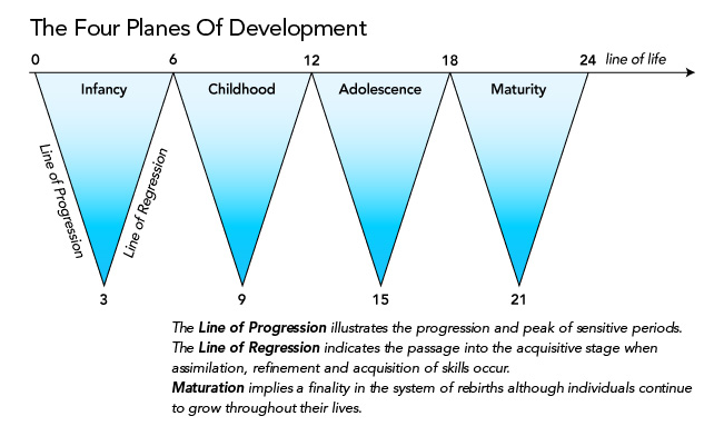 The Four Planes of Development Progression and Regression