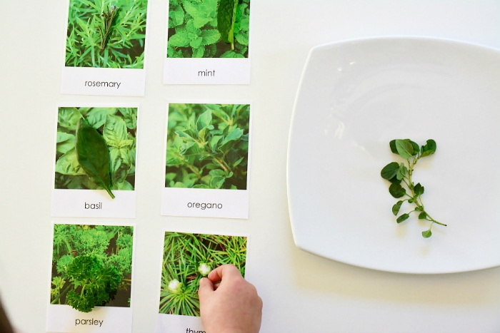 Herb matching cards at How we Montessori