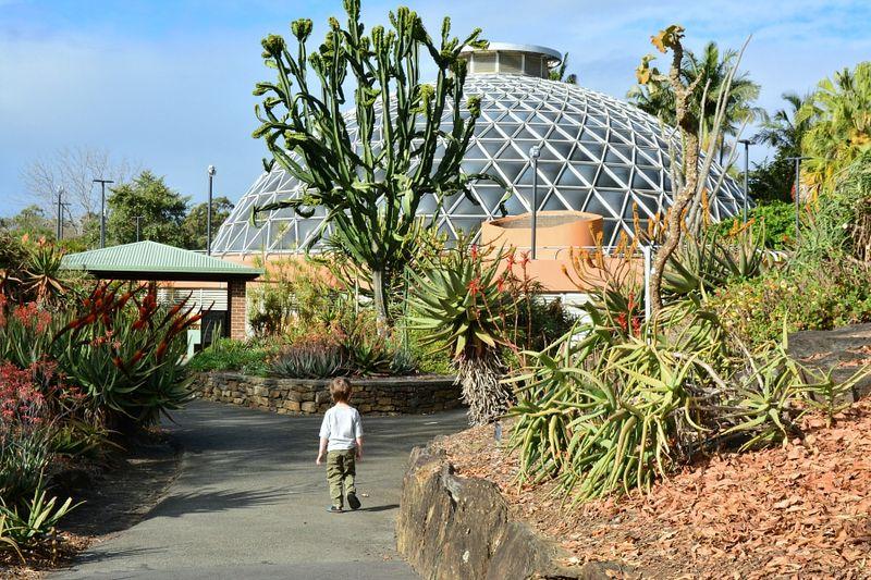 Brisbane Botanic Gardens #1