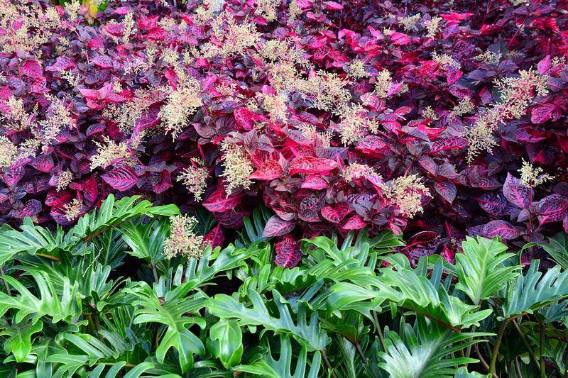 Brisbane Botanic Gardens #10