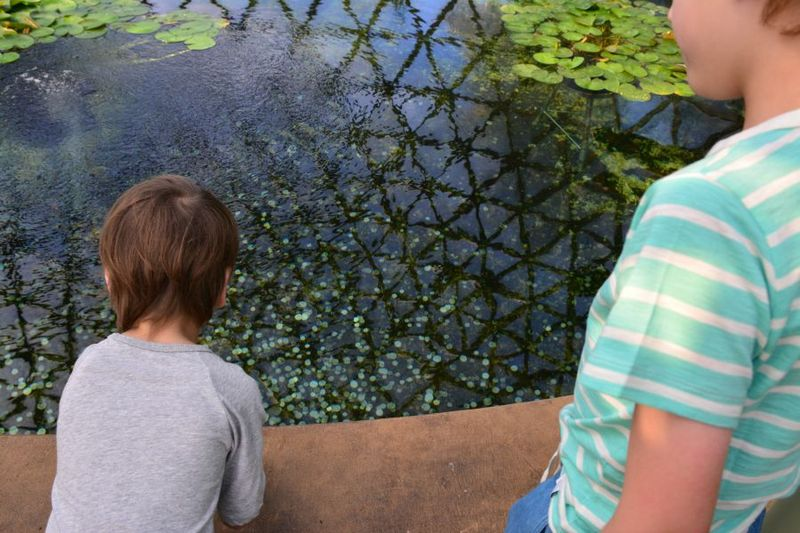 Wishing well at Brisbane Botanic Gardens August 2015