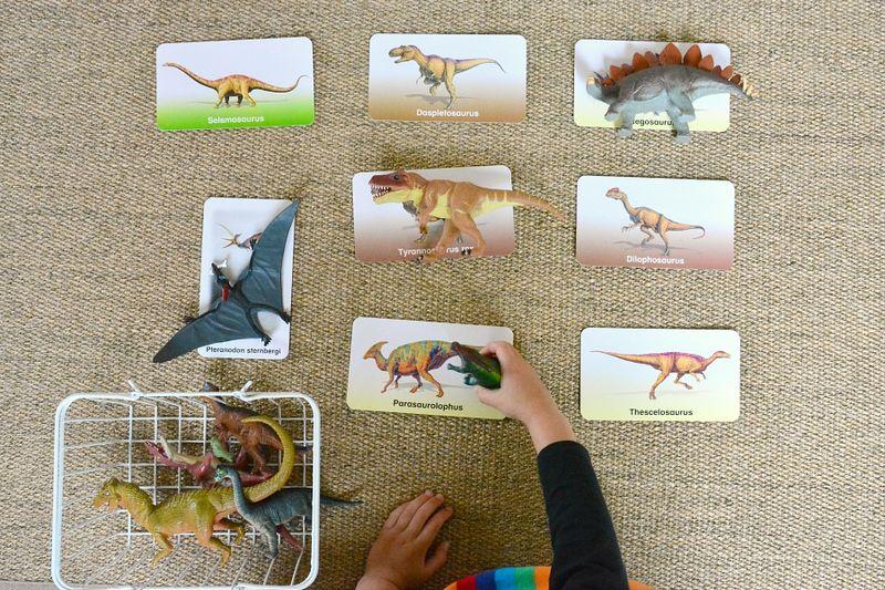 Flash of Brilliance Dinosaur Flashcards at How we Montessori