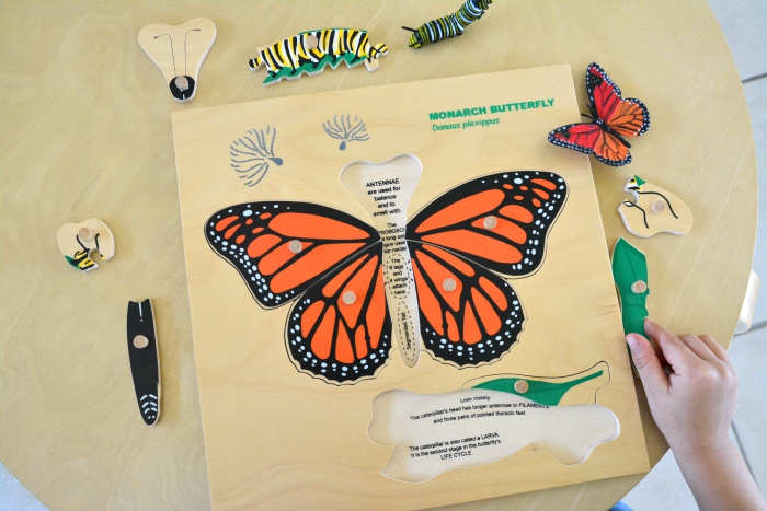Monarch Butterfly Lifecycle Puzzle at How we Montessori
