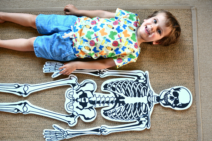 Learning about skeletons at How we Montessori