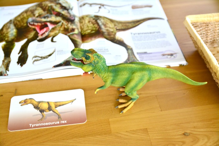 TRex and Dinsoaur Studies at How we Montessori