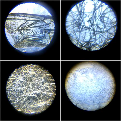 Under the microscope at How we Montessori
