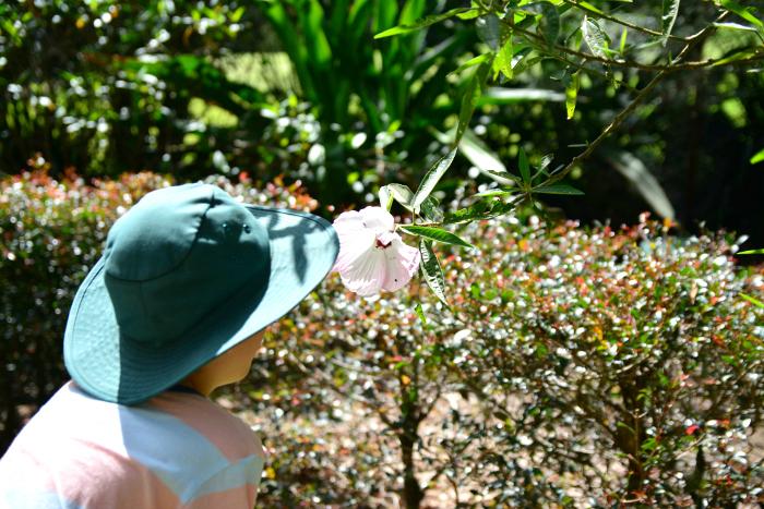 Caspar looking at flower at Maroochy Botanical Gardens