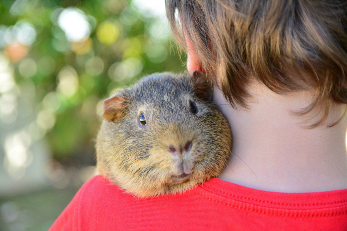 Caspar with his Guinea Pig Felix at HWM