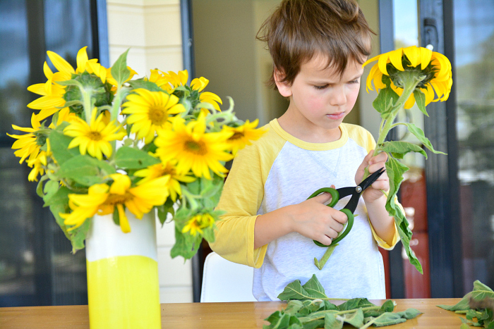Otis trimming sunflowers from the garden at How we Montessori