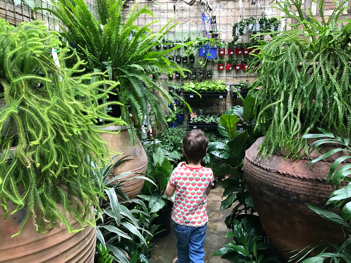 Best Nursery in Brisbane, Mappins Nursery, West End