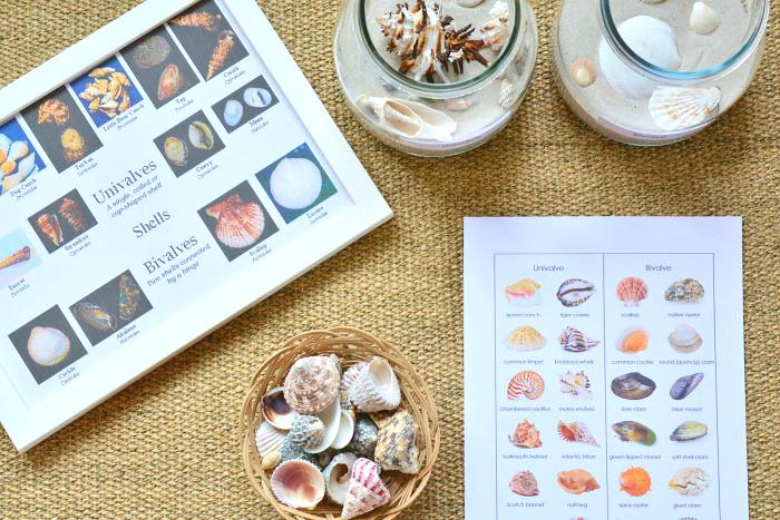 Sea Shell Sorting at How we Montessori
