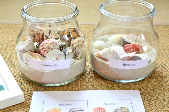 Shell Sorting in Jars at How we Montessori bivalve univalve