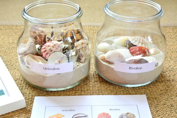 Montessori Sea Shell Activities You Will Love How We Montessori