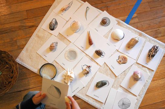 Very Montessori - Matching Shell Cards Michael Olaf