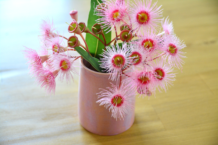 Spring Blossoms!