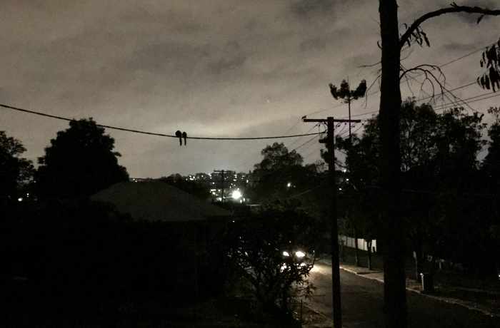 Two possums on a power line, life in Brisbane
