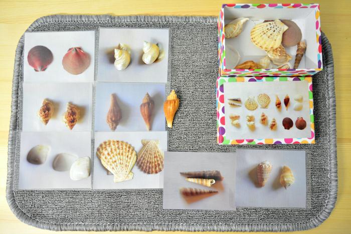 MELA activities shell matching