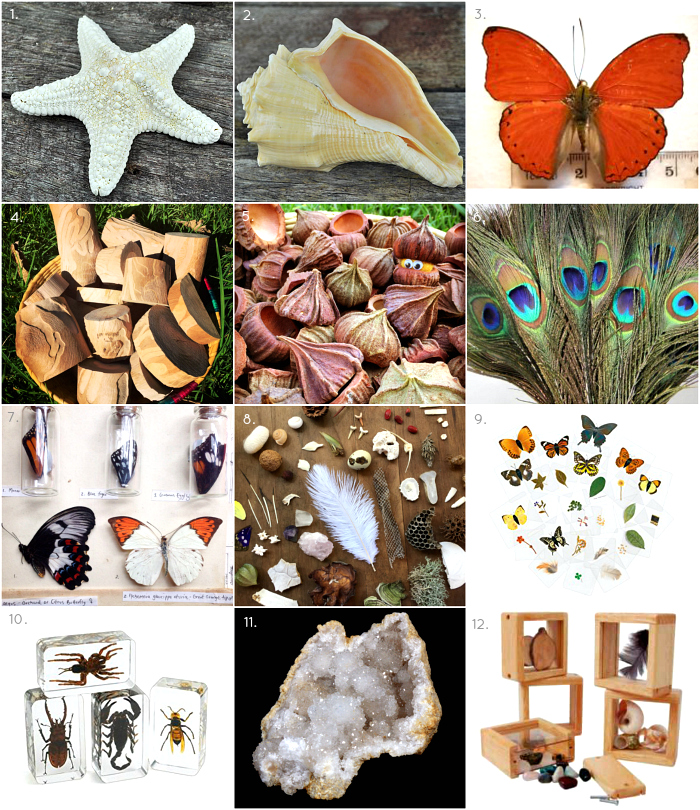 Where we source our natural materials  feather  sea shells and butterflies at How we Montessori