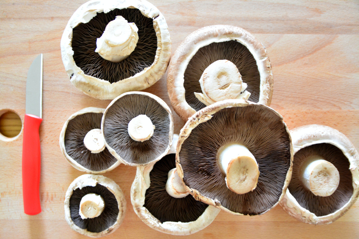 Mushroom Spore Prints at How we Montessori  Mushroom gills