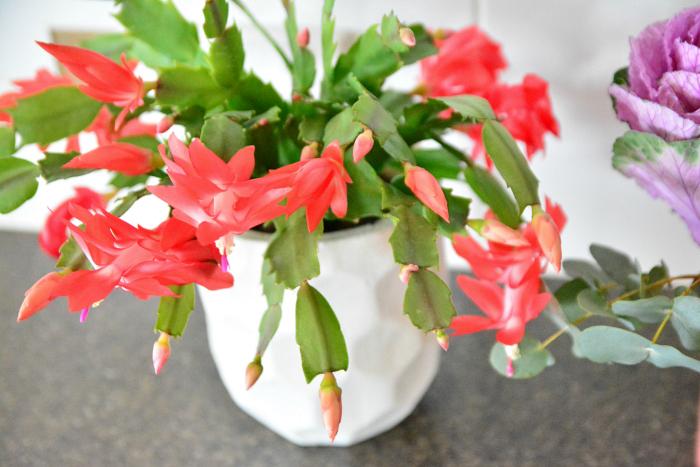 Beautiful flowers at How we Montessori
