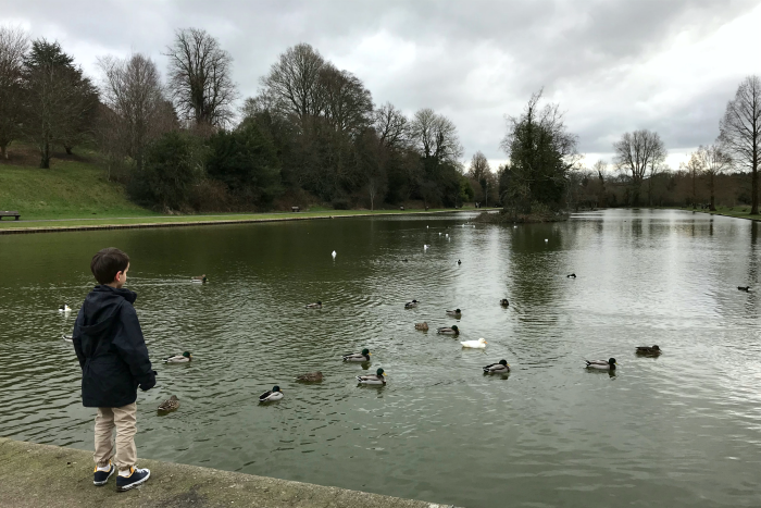 Otis at HWM looking at ducks UK