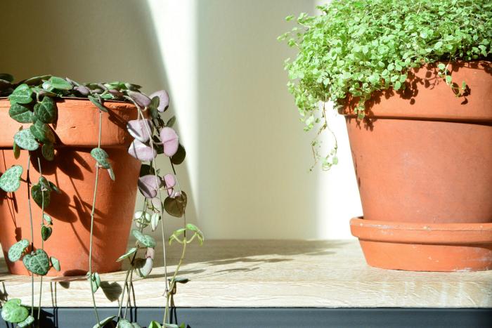 Indoor gardening at How we Montessori