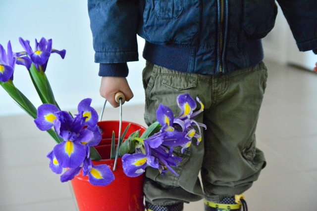 Otis with flower from garden