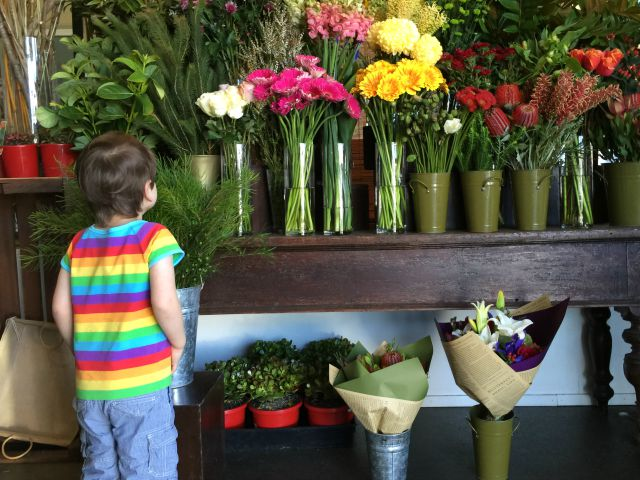 Otis at the florist - Brisbane Ashgrove July 2015