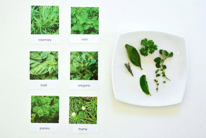 Five Minute Montessori at How we Montessori Matching Herbs