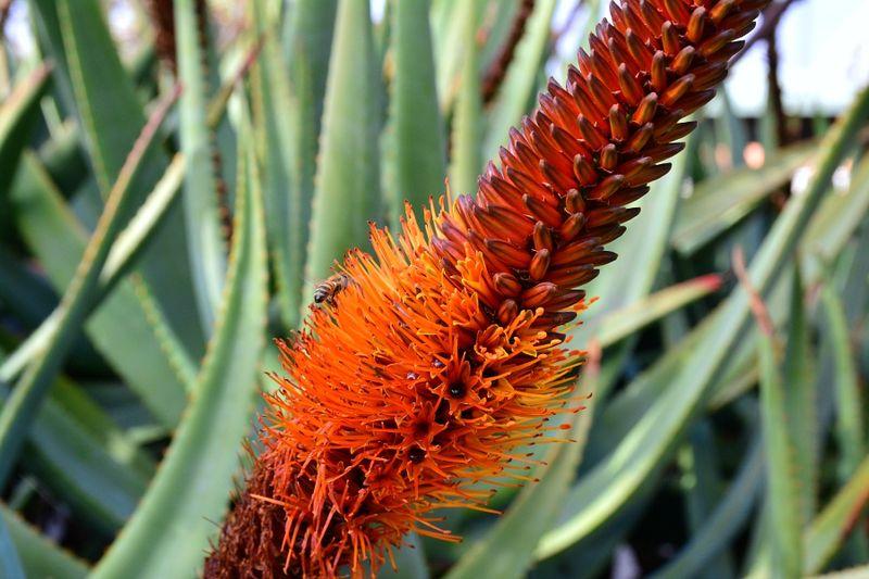 Brisbane Botanic Gardens #3