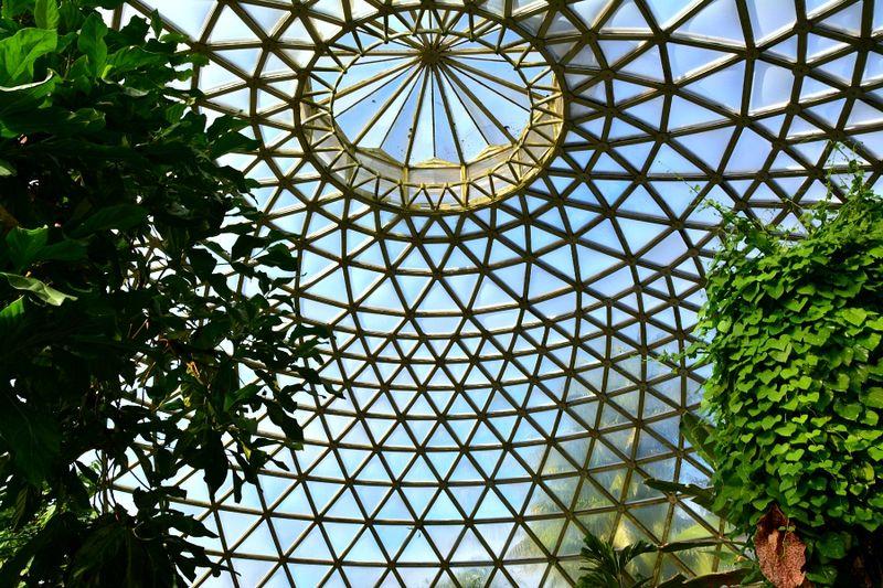Brisbane Botanic Gardens #4