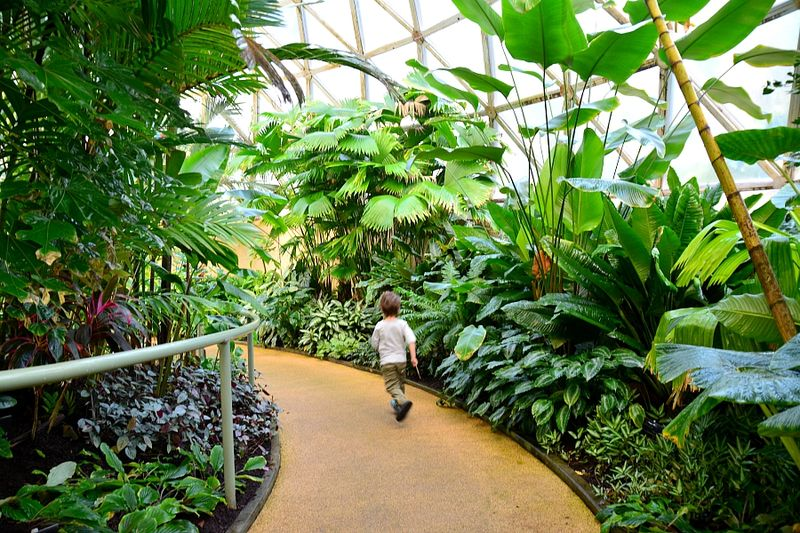 Brisbane Botanic Gardens #6