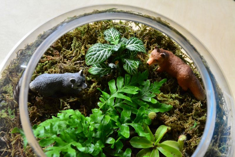 Terrarium at How we Montessori