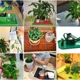 Care of the Environments Plants at How we Montessori