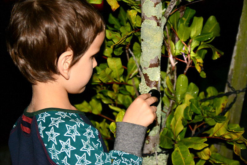 Otis inspecting a tree on a nature walk at night at HWM #3